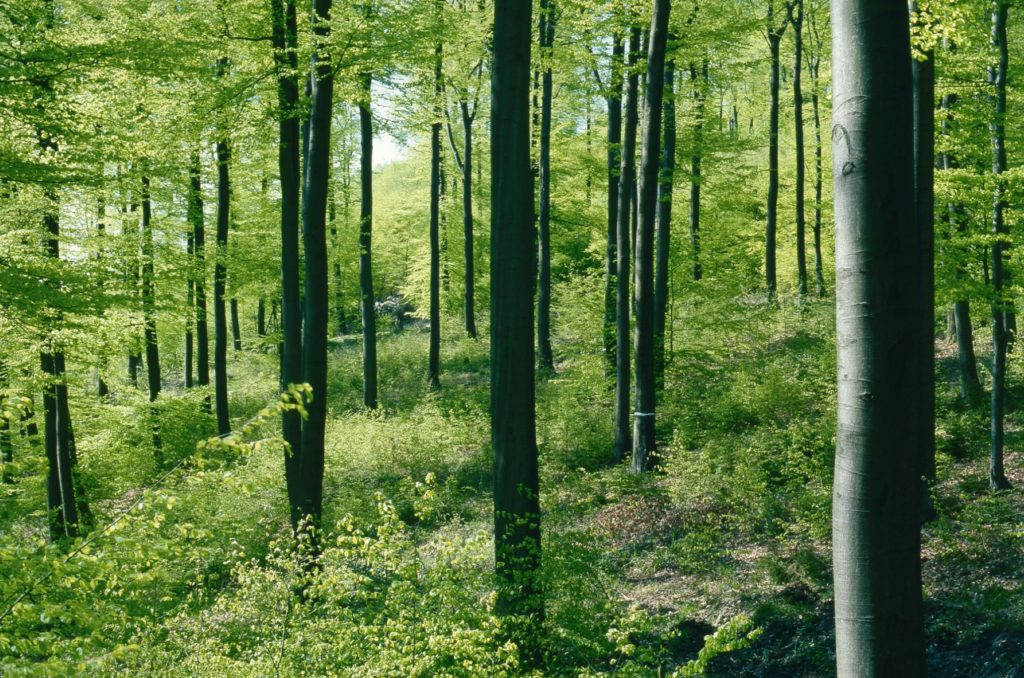 Wald_Umwelt_007_hi